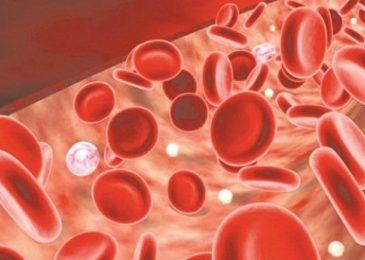 Bệnh thiếu máu là gì? Dấu hiệu và cách chữa trị?